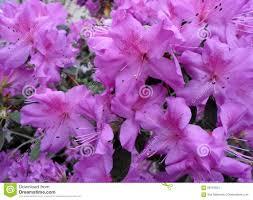 blumen lila