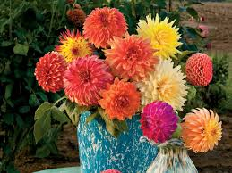 dahlias flowers dazzling dahlia flower arrangements southern living