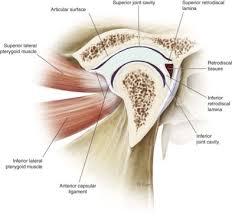 Surface Anatomy Eye Anatomy And Biomechanics Of Condylar Fractures