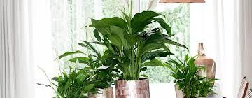 une plante dans une chambre 9 parfaites plantes pour la chambre
