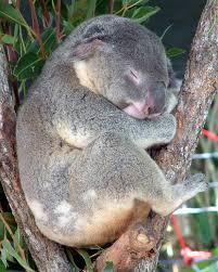 native plants australia list fauna of australia wikipedia