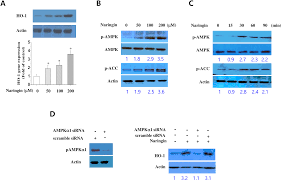 plos one naringin decreases tnf α and hmgb1 release from lps