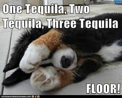Tequila Meme - 17 tequila memes that ll make your day sayingimages com
