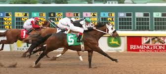 race horse place online race horse listings for sale