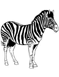 zebra pictures print coloring