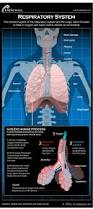 human respiratory system diagram how it works