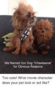 Chewbacca Memes - we named our dog chewbacca for obvious reasons too cute what movie