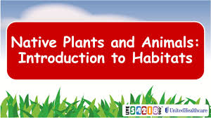 native plants wisconsin native plants and animals introduction to habitats ppt download