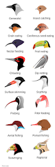 feeding adaptations in beaks when identifying a mystery bird the