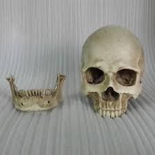 discount resin human skulls 2017 resin human skulls on sale at