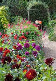 the cut flower patch a guide to growing your own beautiful cut