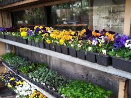 flower shops flower shops nelly s flower shop zuzu s petals steve s