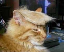To Kill A Mockingbird Cat Meme - donald trump cat trump your cat know your meme
