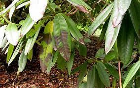 Plant Disease Journal - phytoedapril jpg