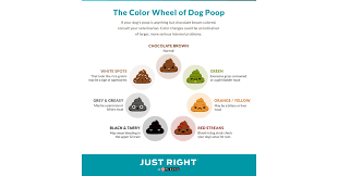 just right by purina gives the scoop on your dog u0027s