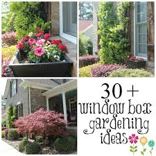 95 best window boxes images on pinterest flower boxes