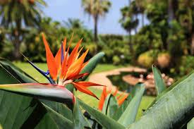 Tropical Plants Pests Top 3 Care Tips For Hawaiian Plants South Maui Gardens Kihei