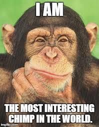 Chimp Meme - chimpanzee thinking imgflip