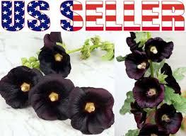336 best gardening ebay plants images on pinterest bulbs daisy