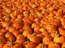hd pumpkin patch halloween autumn wide wallpaper download free