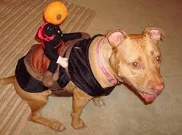 Bull Halloween Costume Pit Bull Halloween Parade Stubbydog