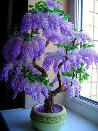 1093 best gardening bonsai images on bonsai trees