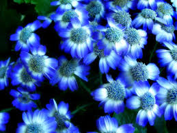 blue flowers meaning types of blue flowers