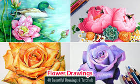 40 beautiful flower drawings realistic color pencil drawings