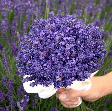 lavender bouquet lavender bouquet for a wedding bouquet guide https