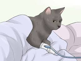 how to prevent urinary tract infections in cats 9 steps