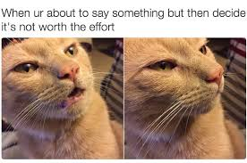 Cats Meme - 18 times cats were actually relatable af