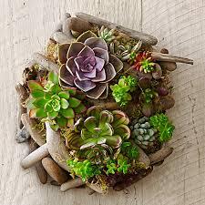 succulent driftwood wall art williams sonoma