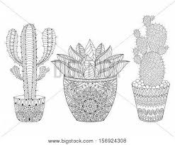 zentangle cactus set vector vector u0026 photo bigstock