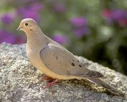this flirty pigeon has more grace and poise than i do funny