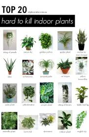 best house plants top 20 hard to kill indoor plants l plants gardens and houseplants
