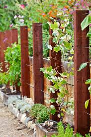 best 20 grape vine trellis ideas on pinterest u2014no signup required