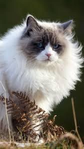 161 best cat photos picks images on pinterest animals kitty