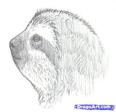 how to draw sloths step by step forest animals animals free