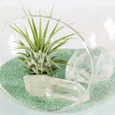 diy terrarium kit air plant clear quartz crystals and mint