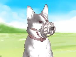 How To Train Dog To Stop Barking How To Train A Puppy Not To Bite 9 Steps With Pictures
