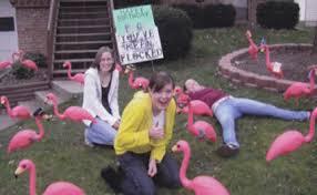 predator decimates scouts flamingo flock mlive