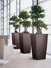 jardins bleus plantes d u0027intérieur green installation art
