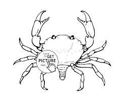 sea animals coloring pages for kids printable free