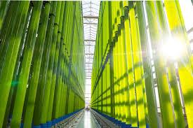 aci 8th european algae industry summit aci