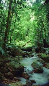 native plants in tropical rainforest best 25 tropical rain forest ideas on pinterest tropical forest