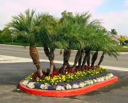 Front Yard Tree Landscaping Ideas Exciting Front Yard Landscaping Ideas With Palm Trees Photo Ideas