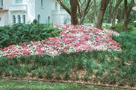 Tree Care Tips To Make by Best Landscape Practices To Ensure Your Trees Grow In The Best Way