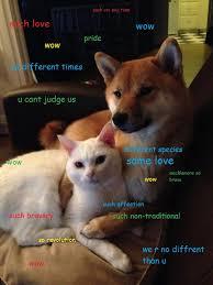 Doge Girl Meme - doge reading doge pinterest doge meme doge and meme