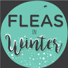 How Long Do Fleas Live In Carpet Fleas In Winter What You Need To Know Faq Wondercide Blog