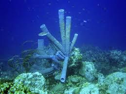 Azure Vase Sponge Facts 5 Fascinating Types Of Marine Sponge
